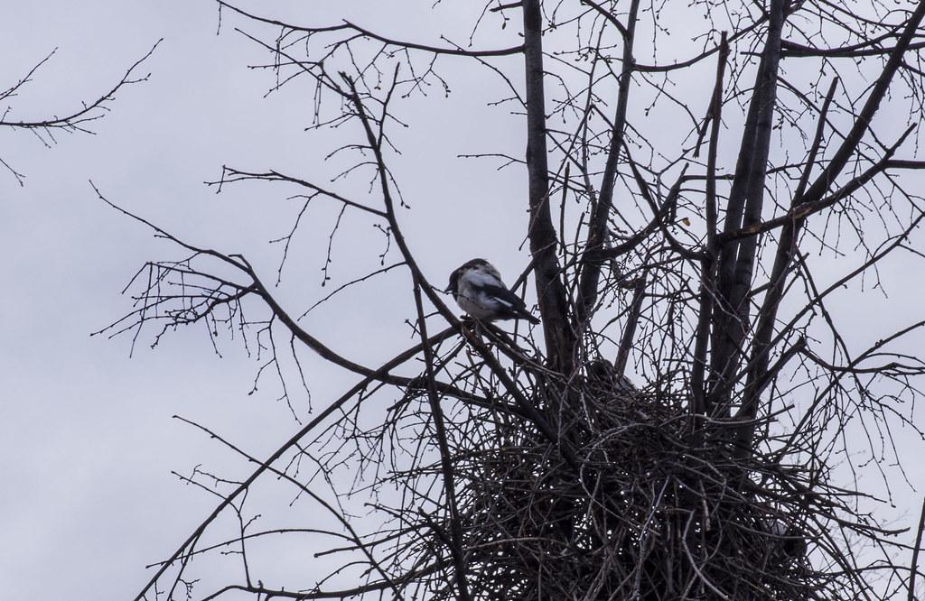 История гнезда, слётки, май.