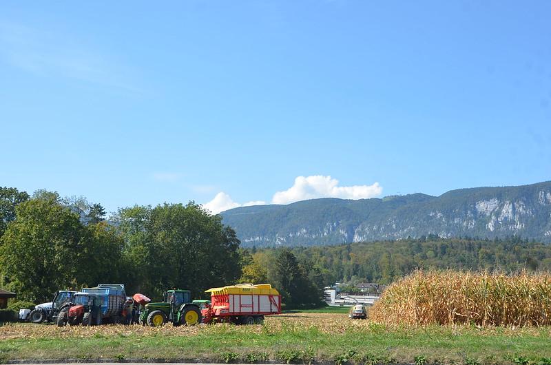 Maize Harvest 12.09 (2)