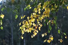Осень (Autumn)