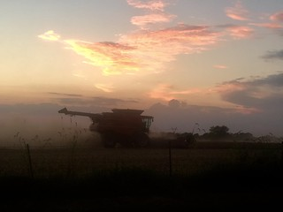 Harvesting soybeans in the sunset.    -A73DAB7FF0A8