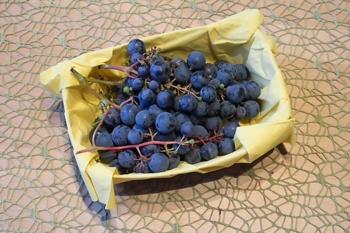 Weintrauben (aus dem Garten unserer Freunde)