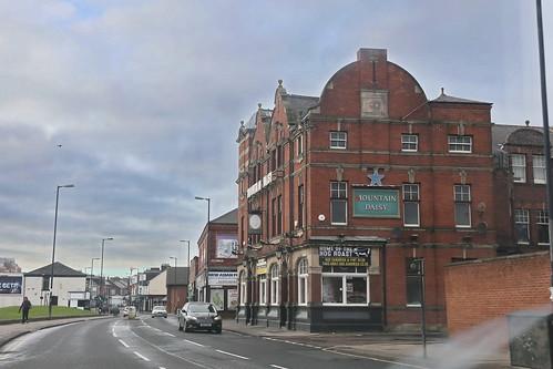 Sunderland, Mountain Daisy