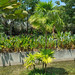 Short and tall Palm Trees by per.svensson@mac.com