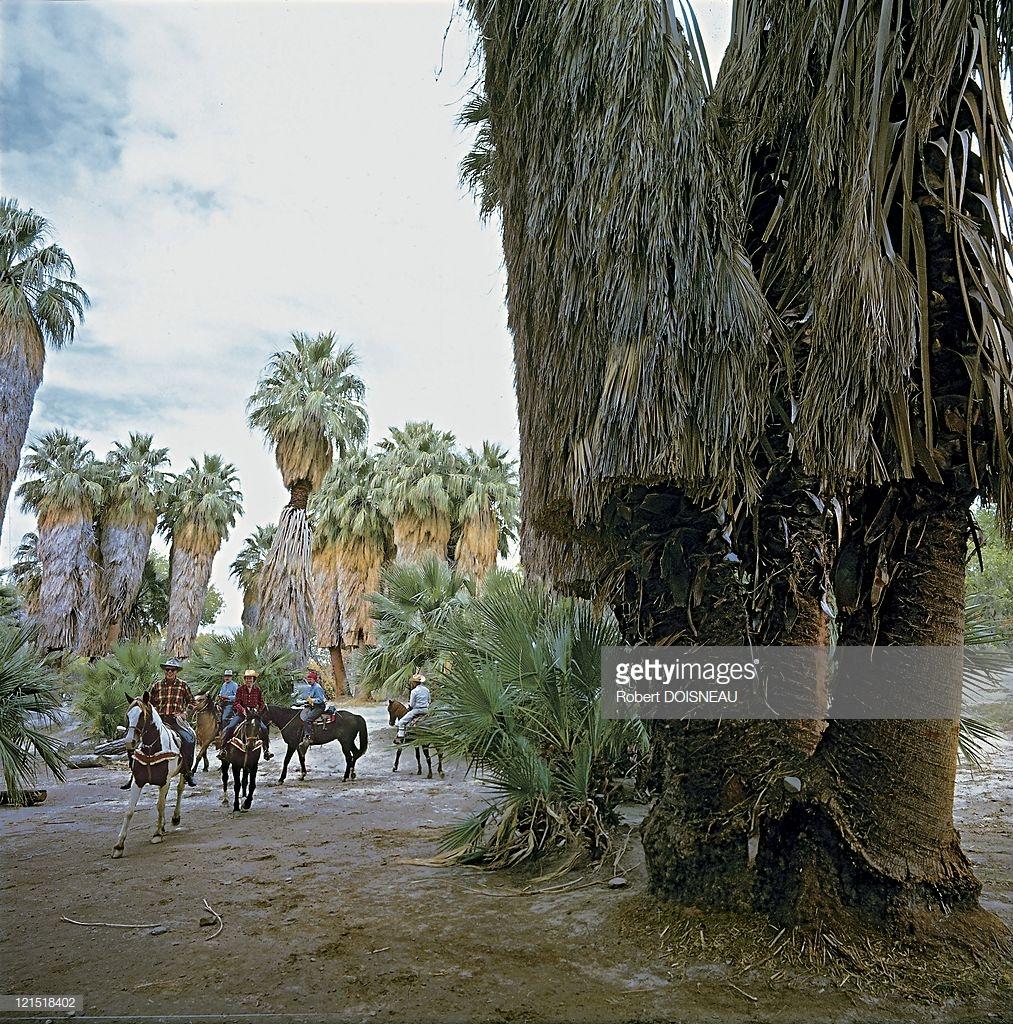 1960. Палм-Спрингс. Ковбои на лошадях