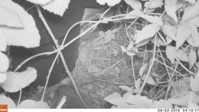 Nest gathering