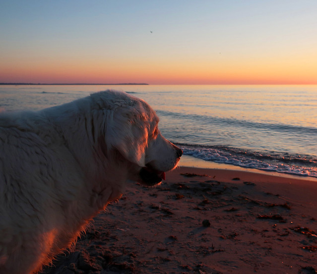 Ditte's last sunset