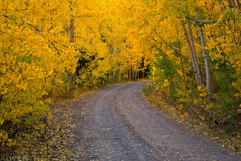 The Road To Fall