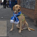 The best dressed dog on Merseyside