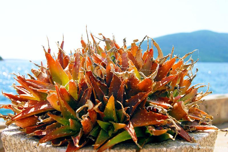 Растение на набережной в Росе