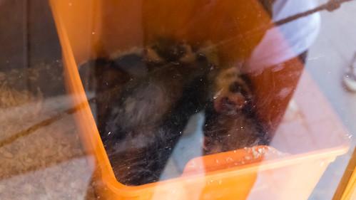 Sleeping ferrets, Wilmcote