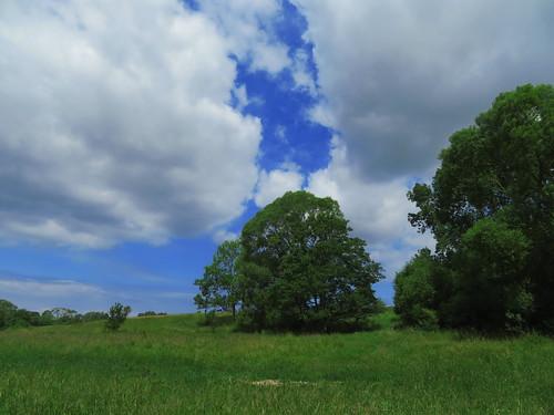 20180618 14 353 Baltica Wolken Bäume Baum Weide