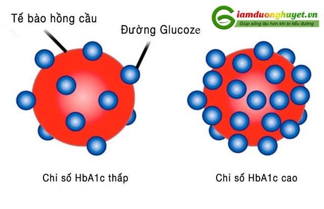 Chỉ số đường huyết HbA1c là tiêu chí quan trọng trong chẩn đoán và điều trị tiểu đường