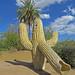 Saguaro Slide