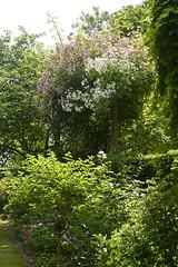 2018.06.20.078 CASTILLON - Les jardins, allée des fleurs