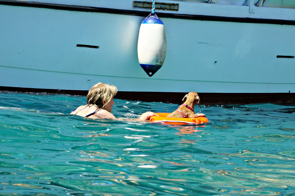 Naapuriveneen koira oli innokkaampi uimari kuin omani.