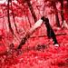 Atina In Infrared