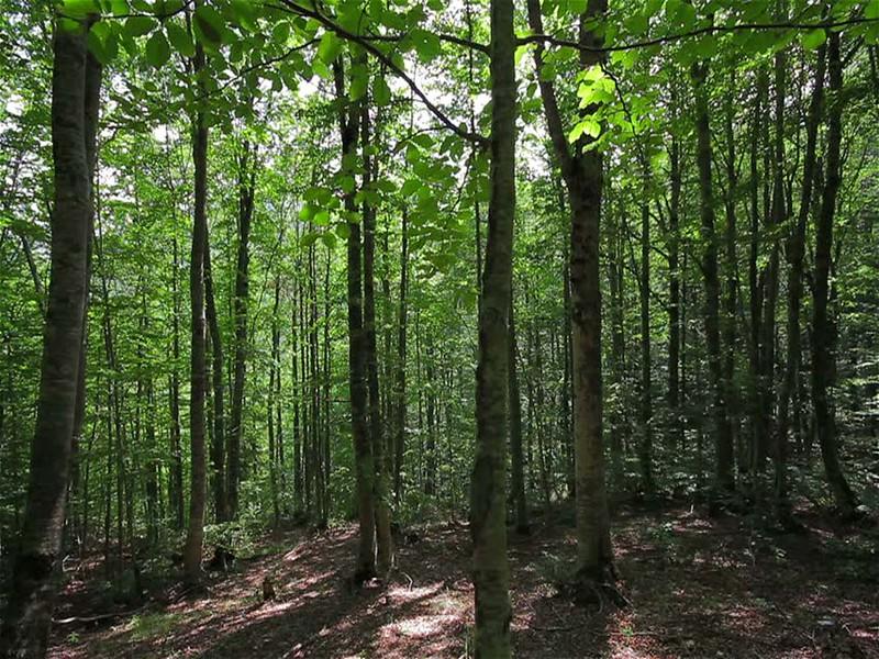 वनाधिकार