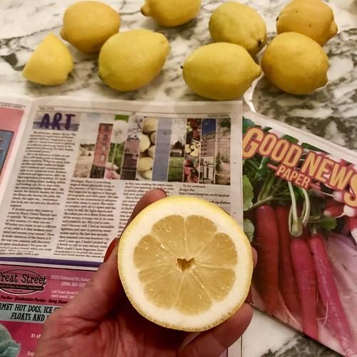 spiration is everywhere...even in lemons (heart).  Artist Bridget Fox