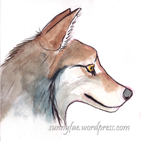 wolf head sketch coloured in watercolour side view