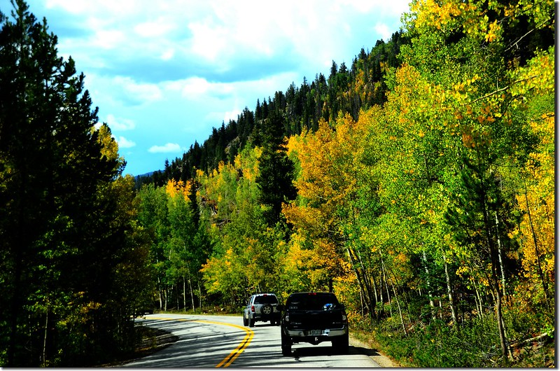 Aspen trees in autumn,  Montezuma Rd, Keystone (16)