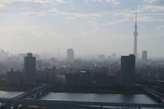 foggy suburb skyline