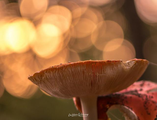 Mushrooms@FTW