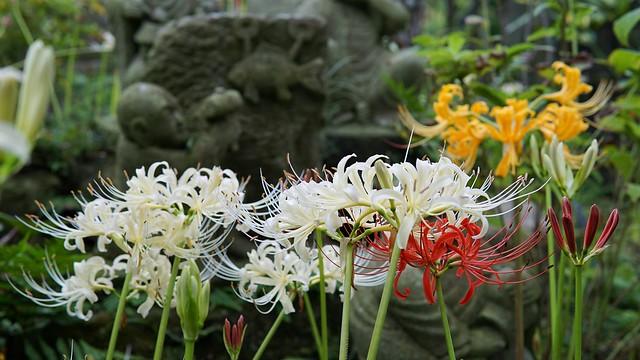 常泉寺(花寺)DSC00709-01