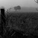 Im Nebel 03 sw
