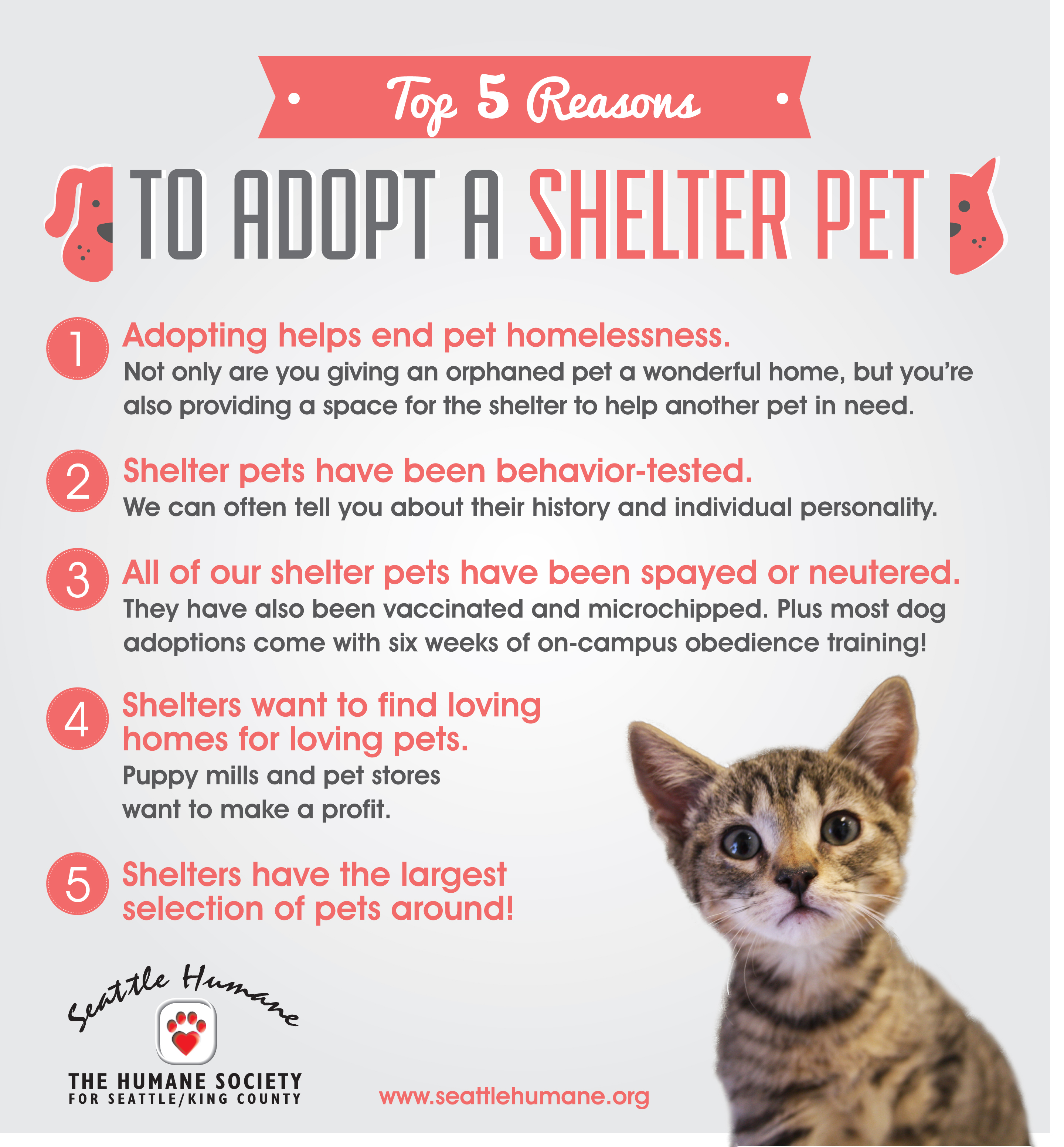Flyer from the Humane Society for Seattle / King County, Washington