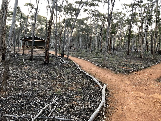 Camping at Dryandra forest