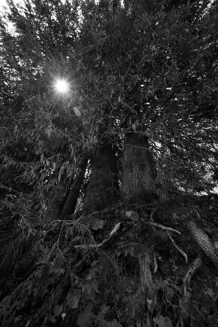 Trees, Switzerland, Jul 18
