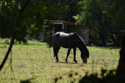 Quiétude du cheval en vacance