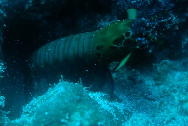Small lobster, Fujifilm X-T20, XF35mmF1.4 R