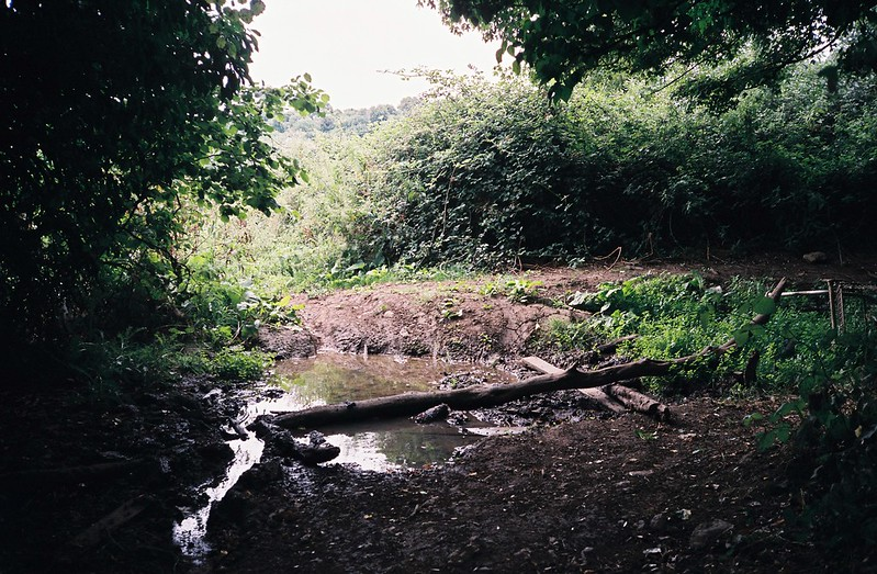 Drought stream, Mannings Wood