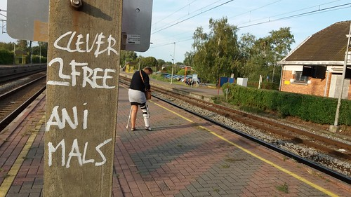 Clever people free animals