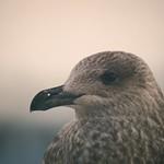 Bird Bokeh - Schleswig-Holstein - Germany