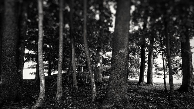 August 31 - The 0.01 Acre Wood