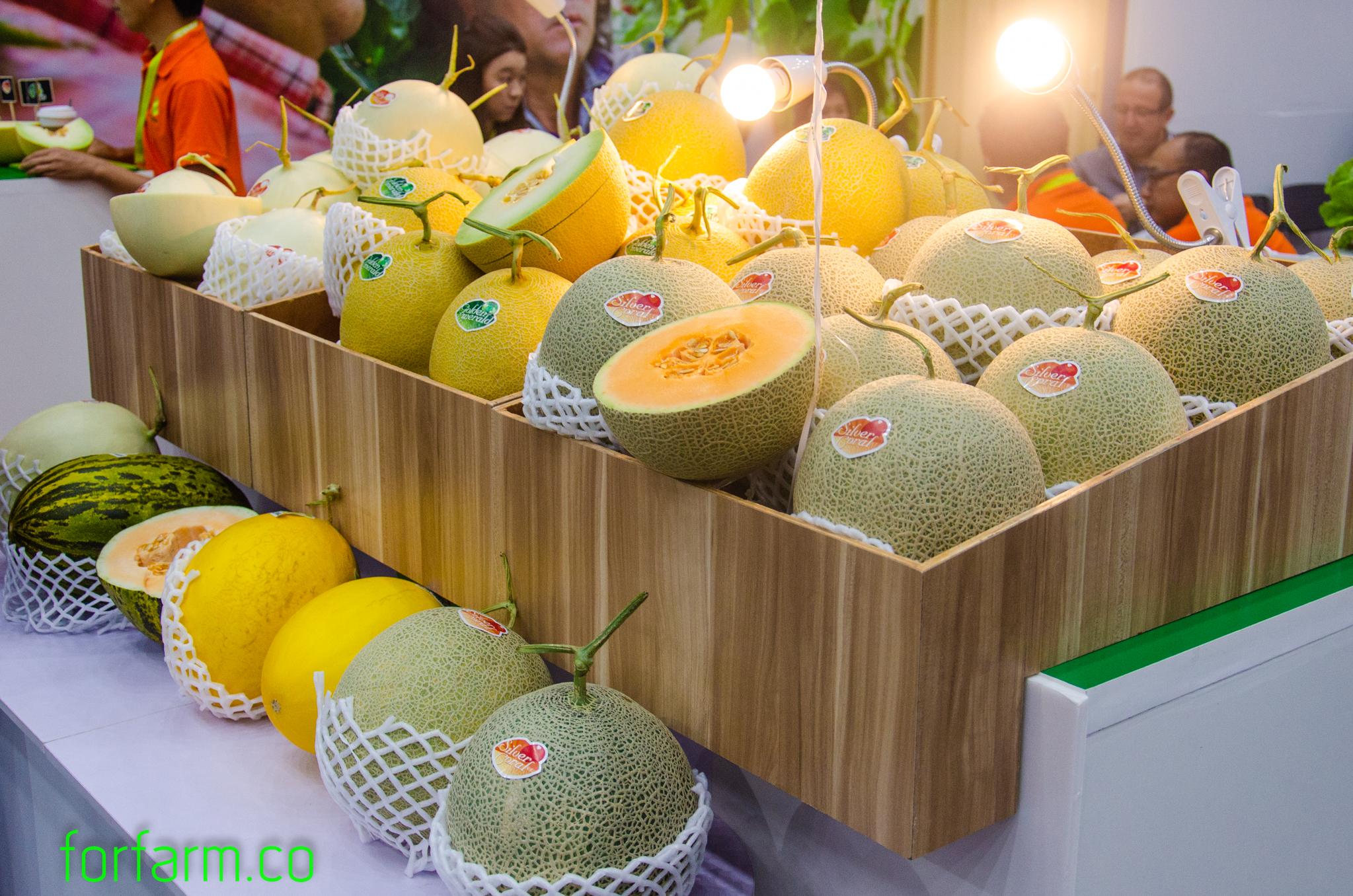 เมล่อน (Melon)