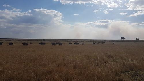 Maasai Mara 2018