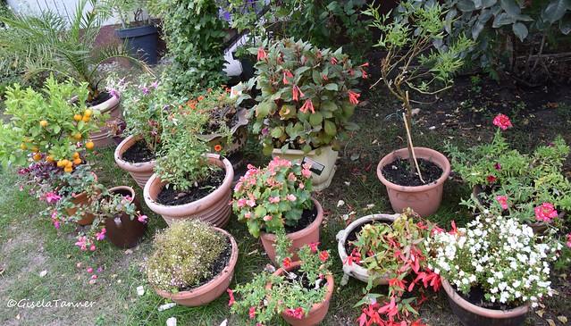 Mein Topfgarten im September ...
