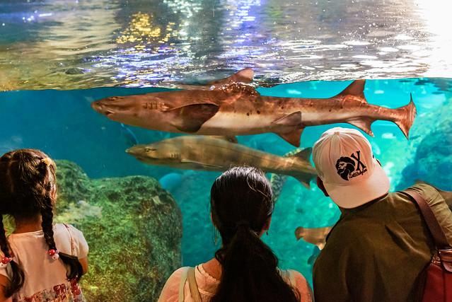 At Enoshima Aquarium, Fujisawa : 新江ノ島水族館にて(藤沢市), Nikon D750, Tamron SP 35mm f/1.8 VC