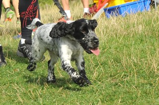 Tring parkrun puppies
