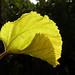 Autumn Leaf:    256/365