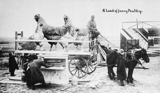 """""""A Load of fancy Poultry."""", Toronto, Ontario / « A Load of fancy Poultry » [Un chargement de belle volaille], Toronto (Ontario)"""