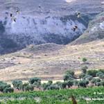 Aves en las lagunas de La Guardia (Toledo). 8-08-2018