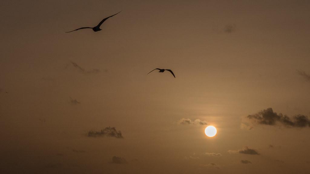 Coucher de soleil à Mayreau... 43428767124_65fd672277_b