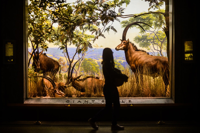 Walk In New York - American Museum of Natural History - NYC 2017  (6)