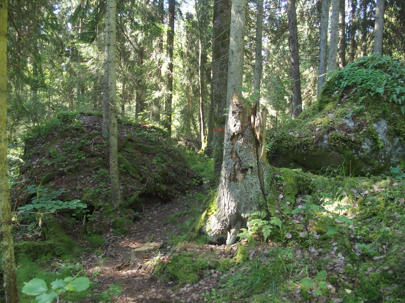 SÖ E5.1 Vresig skog
