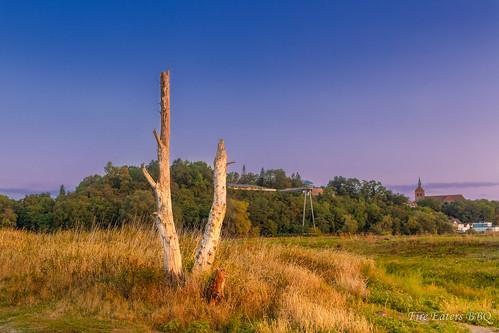Toter Baum bei Arneburg
