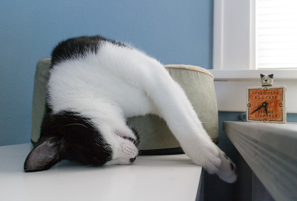 Our cat Boo sleeps slumped over the cat bed next to a clock that says 'After Dark All Cats Become Leopards'